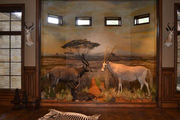 Convention Show Dallas Safari Club 2014 завершилось - Даллаский Сафари Клуб - Лицензия на отстрел редкого черного носорога продана в США за $350 тыс