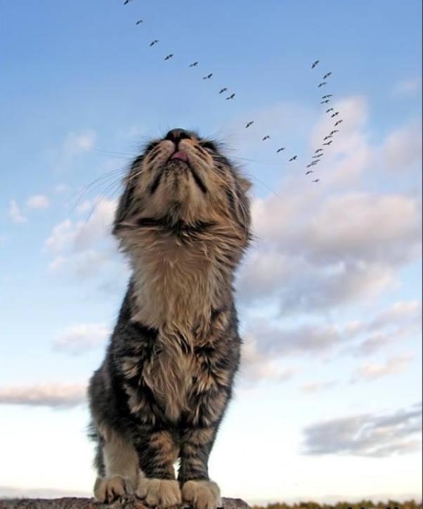 День кошек в России - 1 марта день кошек