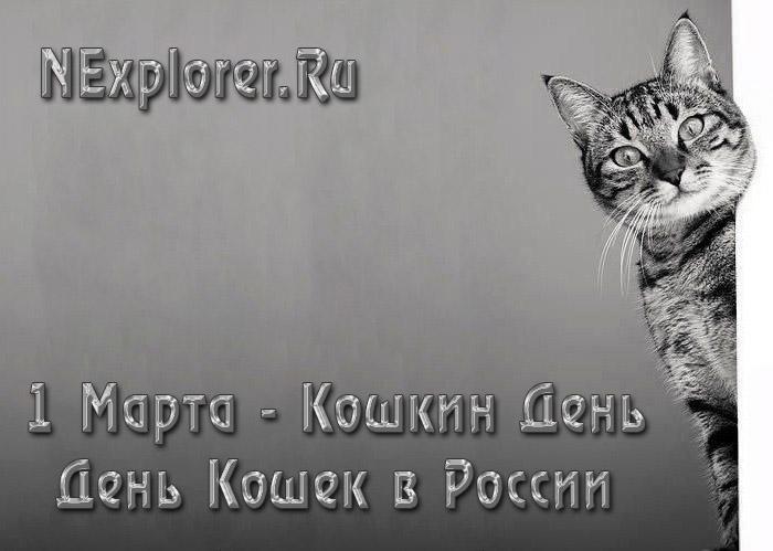 День кошек в России - 1 марта кошкин день