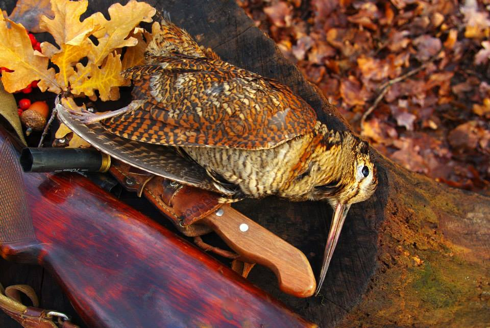 Охота на вальдшнепа осенью