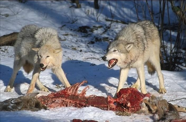wolf v colorado Colorado & terry v ohio - case study example nobody downloaded yet extract of sample wolf v colorado & terry v ohio tags: canto v colorado fourteenth.