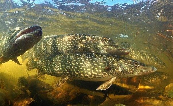 Все о рыбалке весной