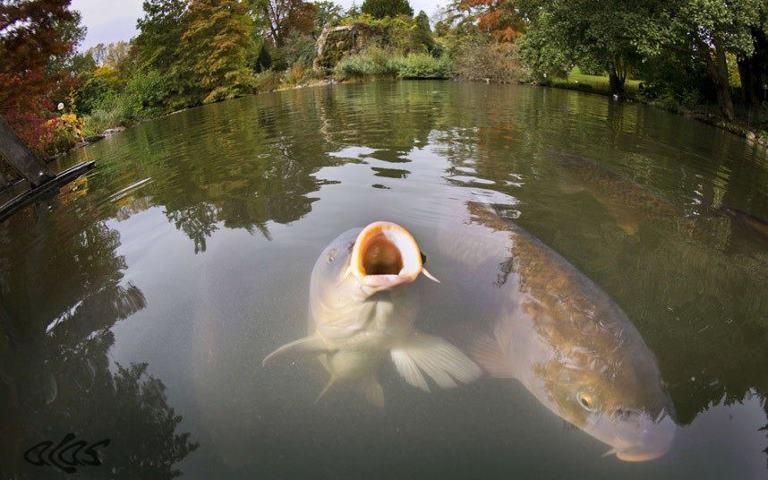 какая рыба клюет на сыр