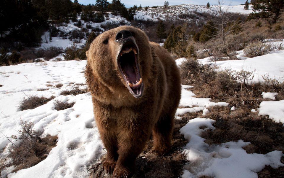 Встреча с медведем в лесу что делать