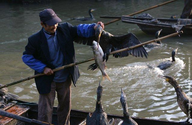 рыбаки в японии видео