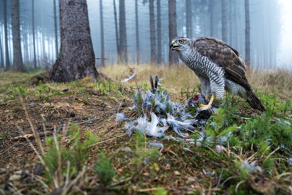 Осенняя охота 2017 открытие осенней охоты 2017 сроки