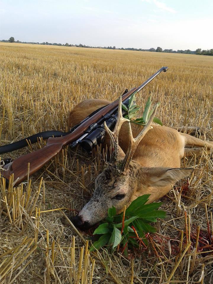 Сезон охоты на пятнистого оленя и