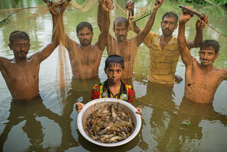 Сулейман Шейх показывает пресноводных креветок, выращенных в принадлежащем его отцу маленьком пруду вблизи города Кхулна, Бангладеш. Это экспортный товар, приносящий хорошую прибыль. Его семья выращивает в том же пруду рыбу, а в сухой сезон – рис, удобрением для которого служат рыбные отходы. Такая поликультура позволяет в три раза повысить объемы продукции без особого ущерба для природы.