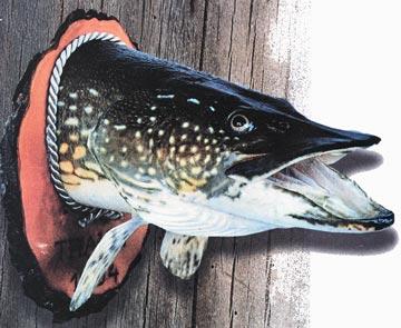 Изготовление чучела рыбы