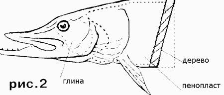 Как сделать чучело рыбы и сохранить рыболовный трофей - Мастеркласс