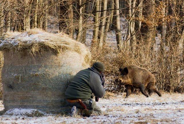 Охоты 2013 в омской области охота на