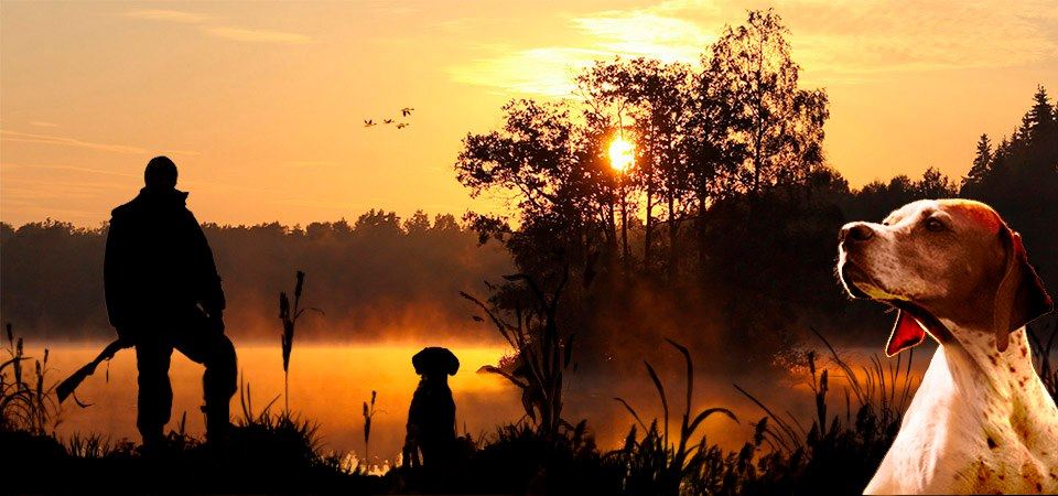 На Сумщині незабаром розпочнеться сезон полювання на пернату дичину
