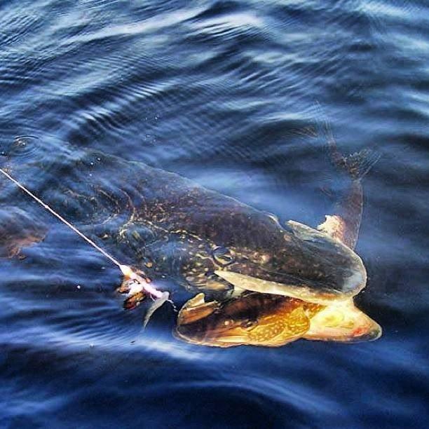 как ловится рыба в новолуние
