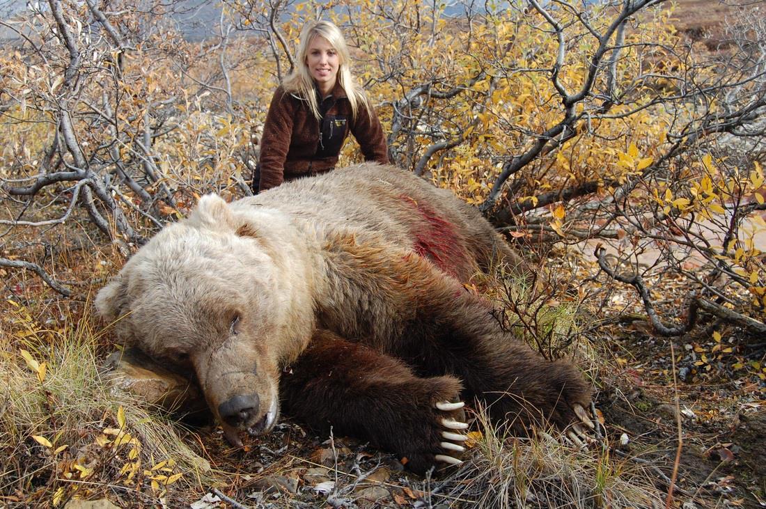 Картинки гризли медведь