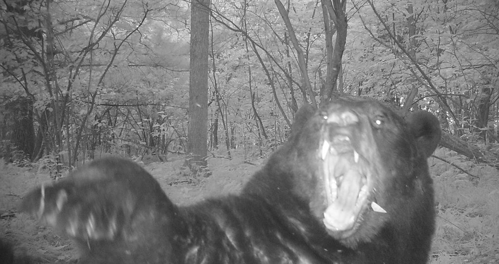 Медведь, нападение медведя, нападение медведя на человека, охота на медведя, медведь-людоед
