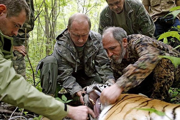 Владимир Путин с тиграми