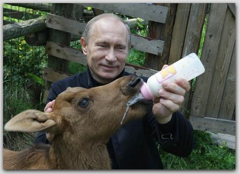 Путин с лосями