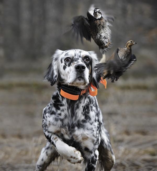Лучшие фотографии охоты журнала Peterson's Hunting