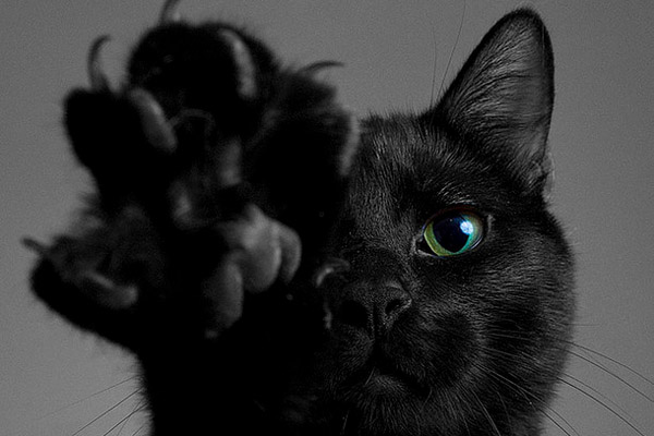 Темные картинки с котами и