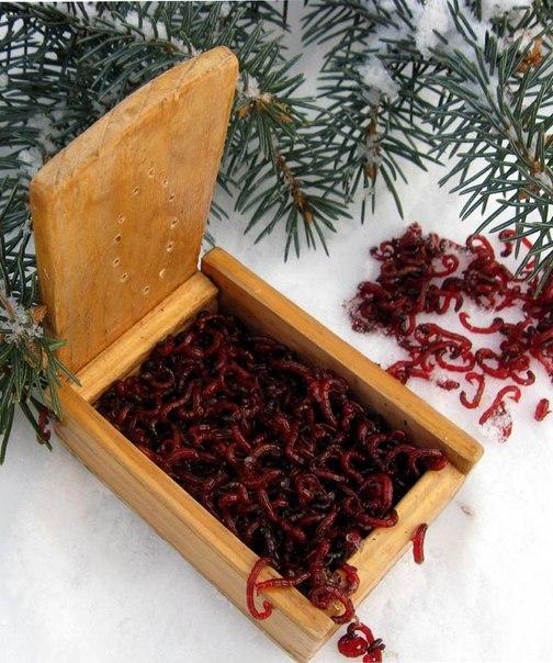 растительные прикормки для зимней рыбалки