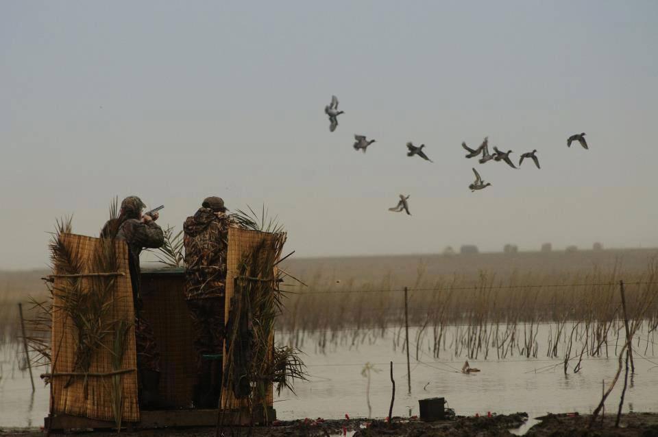 Засидка для охоты на утку