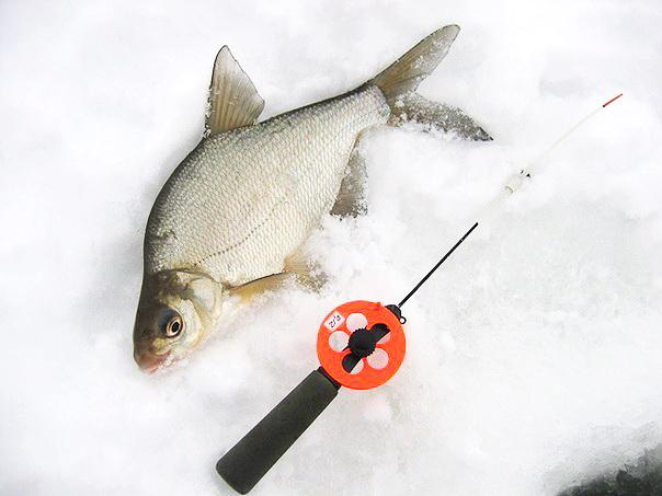 Ловля леща зимой на поплавочную удочку