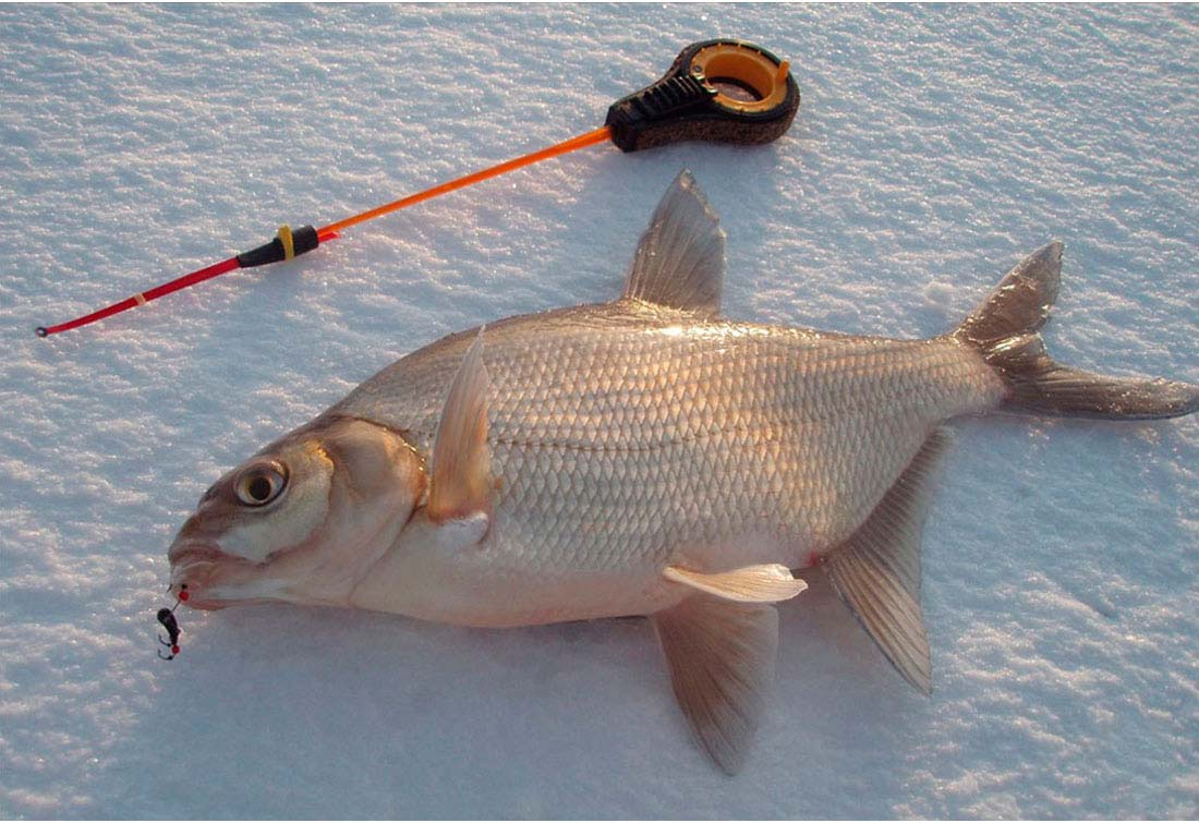 Ловля леща в марте, рыбалка на леща в марте, где ловит леща в марте, как ловить леща в марте, на что ловить леща в марте, прикормка для леща, насадка на леща, наживка на леща