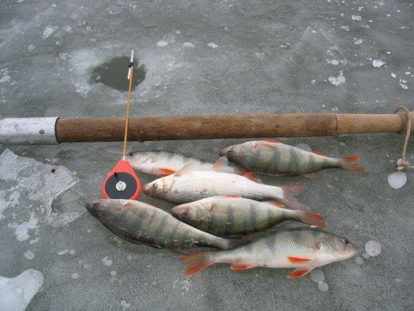 какая рыба клюет в сентябре и октябре