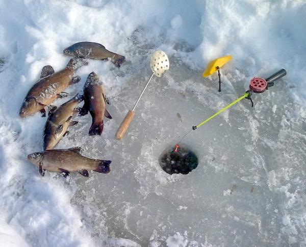 Зимняя ловля линя со льда, ловля линя зимой