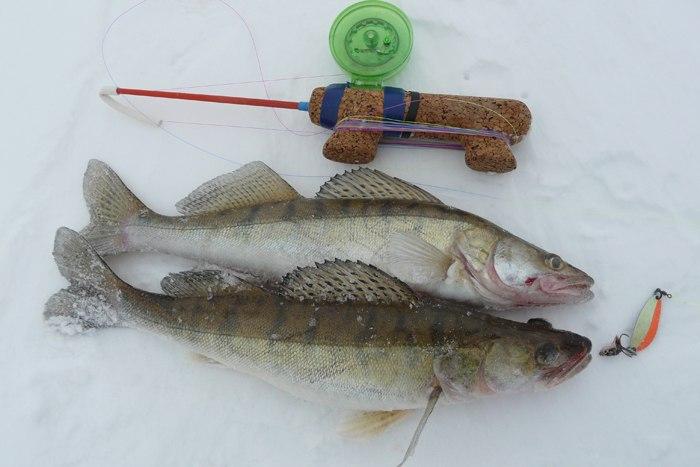 Ловля судака зимой, зимняя ловля судака со льда