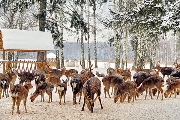 Цветные картинки диких животных зимой