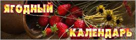 Ягодный календарь, сбор ягод, календарь сбора ягод