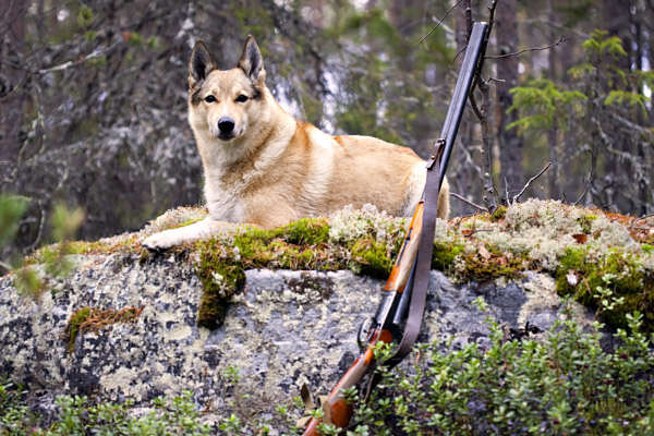 Весенняя охота, Штраф за небрежное хранение оружия, Штраф за утрату оружия, штраф за стрельбу, хранение оружия, ношение оружия, перевозка оружия, охотничье оружие, как перевозить охотничье оружие, как хранить охотничье ружья, какие документы для ружья на охоте, охотничье ружье на охоте